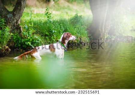 the dog in the water, swim, splash, play