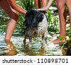 The dog is bathed in the river - stock photo