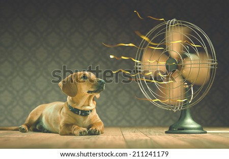 The dog is cooling down with the fan while watching the yellow ribbons in motion. Depth of field in eyes line and center of the fan. - stock photo