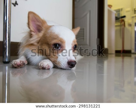The dog is lying on the floor - stock photo
