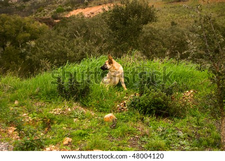 The dog is sitting on the grass - stock photo