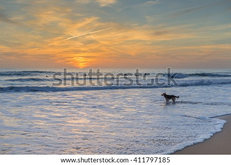 The dog is worried about the surfer owner. Sunset on the sea.