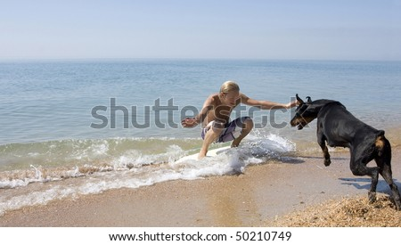 The dog jumps on riding surfer. - stock photo