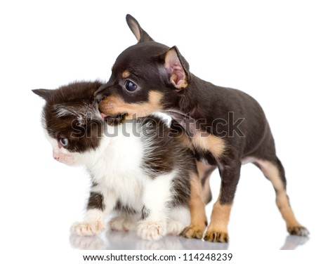 the dog kisses a kitten. Isolated on a white background - stock photo