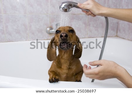 The dog likes a shower in the bath - stock photo