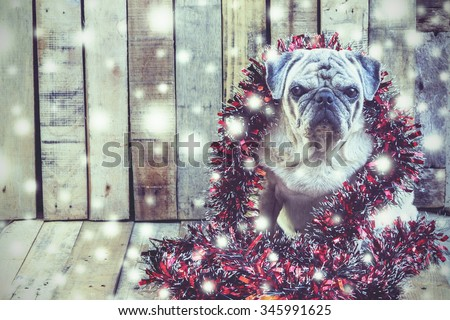 The dog merry christmas and happy new year (Vintage style) - stock photo