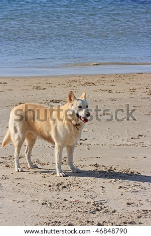 The dog on the beach