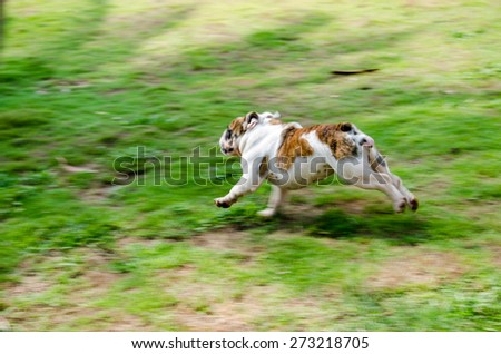 the dog run in the grass, motion blur, soft focus - stock photo