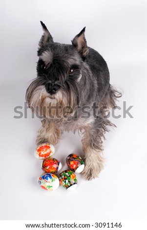 The dog sits with easter eggs on a white background