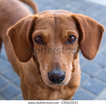 The dog waits for the owner. The lost dog. - stock photo