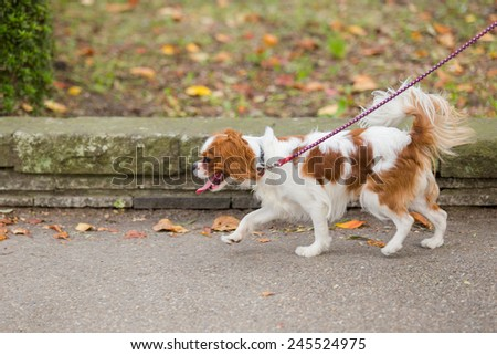 The dog walking in parkland. it feel relax and happiness. - stock photo