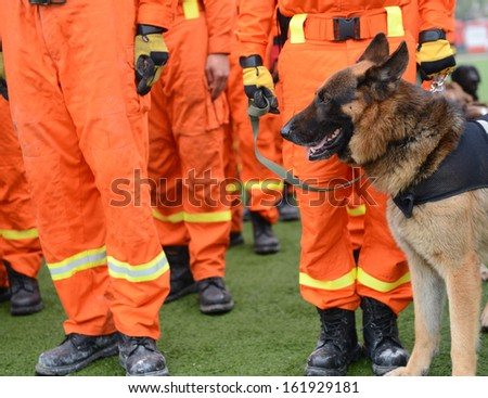The dogs in a row are being trained to rescue. - stock photo