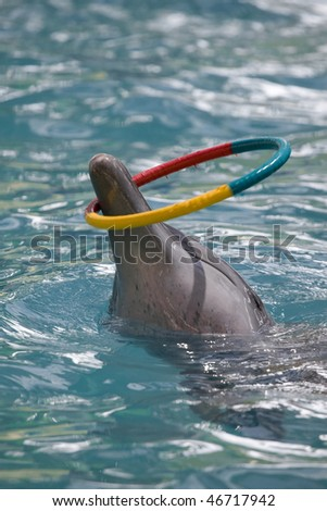 The dolphin plays a color hoop - stock photo