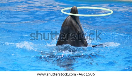 The dolphin rotates a hoop. - stock photo