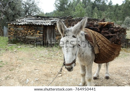 the donkey and the load of firewood