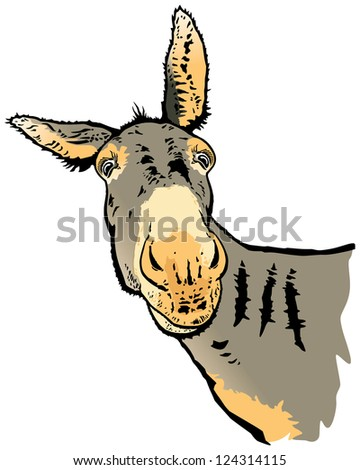 The donkey, illustration from original photo - stock photo