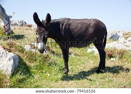 The Donkey next to the church - stock photo