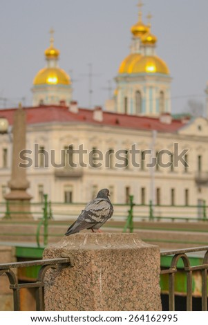 The dove in the background of St. Nicholas Cathedral . St. Petersburg. Russia - stock photo