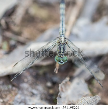 the dragonfly sits on a dry leaf on a meadow