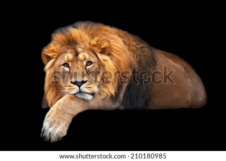 The dreamy look of a lying Asian lion, isolated on black background. The King of beasts, biggest cat of the world. The most dangerous and mighty predator of the world. Oil painting style illustration.