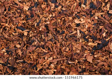 The dried leaves of tobacco smoking pipe for design