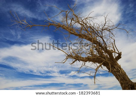 The dried tree against the sky
