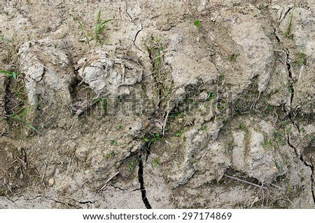 The dried-up dirt with cracks close up