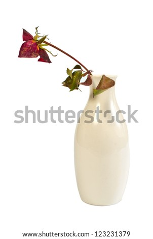 the dried-up rose in a ceramic vase, isolated on the white - stock photo
