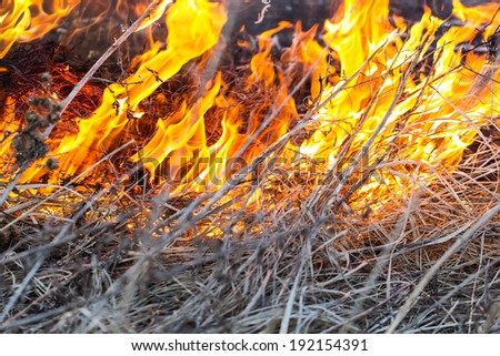 The dry dead grass actively burns down on fire and creates danger of emergence of a fire