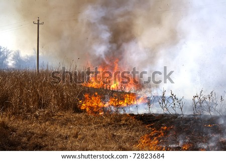 The dry grass in the field burns inflated by a strong wind - stock photo