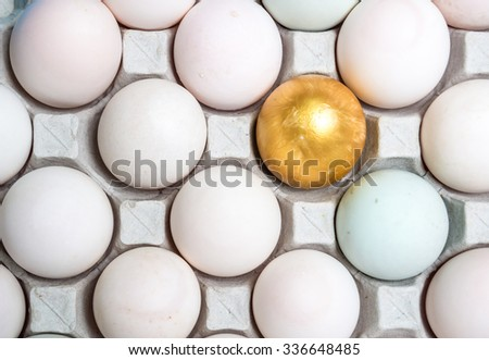 The duck egg golden Eggs put on the tray represent the food packaging and food concept related idea.  - stock photo