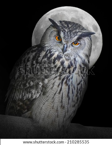 The Eagle owl (Bubo Bubo) and moon.  - stock photo