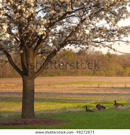 The Early Spring Early sprint in a open field in Illinois. - stock photo