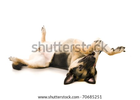 The East European sheep-dog on the white background - stock photo