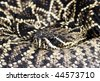 The eastern diamondback rattlesnake is the largest venomous snake in North America. Some reach 8 feet (2.4 meters) in length and weigh up to 10 pounds (4.5 kilograms). - stock photo