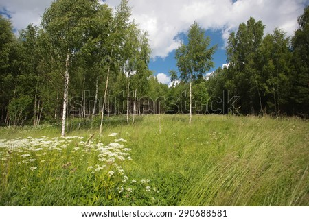 The edge of the forest in summer - stock photo