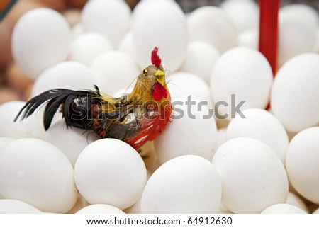 the eggs with a rooster in the bank of a market, Santa Caterina Market, Barcelona - stock photo