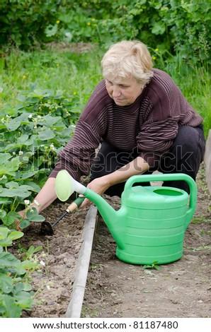The elderly woman works on kitchen garden - stock photo
