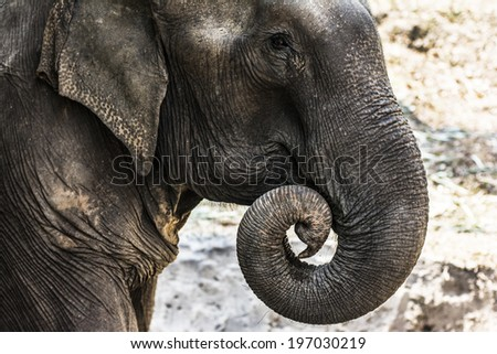 The elephant - stock photo