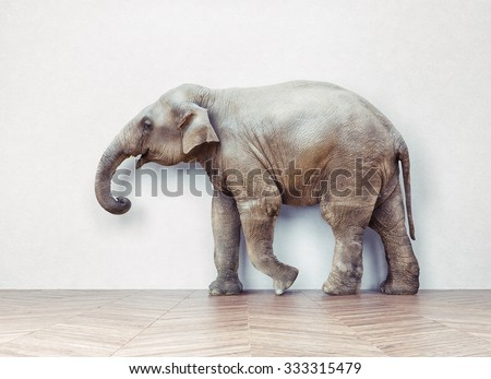 the elephant calm in the room near white wall. Creative photo combination  concept - stock photo