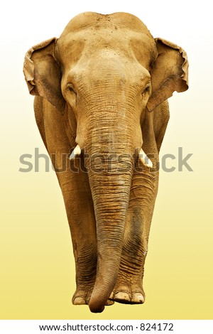 The elephant going towards - stock photo