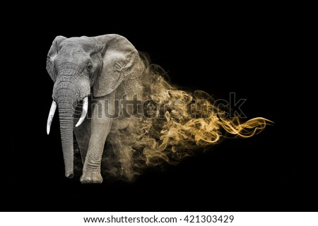 the elephant is one of the big five animals you must see in africa, animal kingdom collection, African wildlife - stock photo