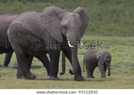 The elephant Mother and Baby - stock photo