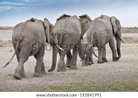 The elephant`s family is on its path.