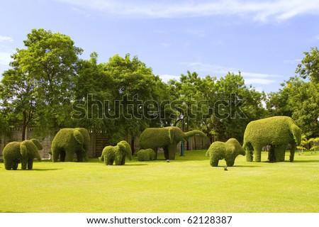 The elephant tree in the park. - stock photo