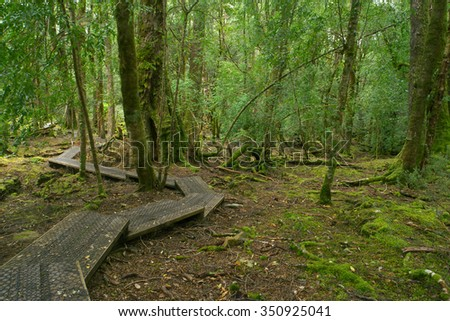 The enchanted walk in world heritage cradle mountian area tasmania