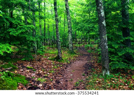 The escarpment trail at Porcupine Mountains State Park winds through a northwoods forest - stock photo