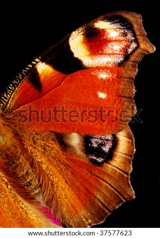 The European Peacock - Inachis io - Wing extremely close up - stock photo