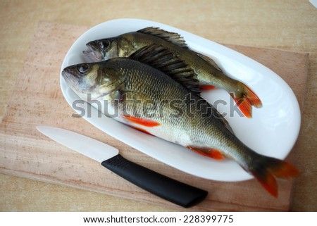 The European perch (Perca fluviatilis) is a highly predatory species of perch found in Europe and Asia.
