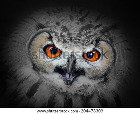 The evil eyes. Angry The Eagle Owl  - stock photo